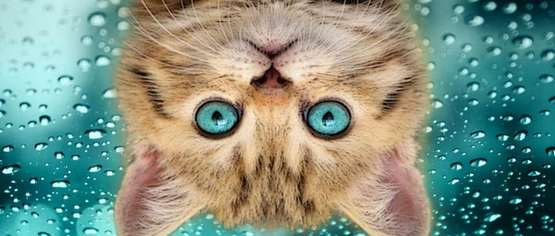 к чему снятся кошки